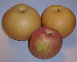 なし&りんご.jpg